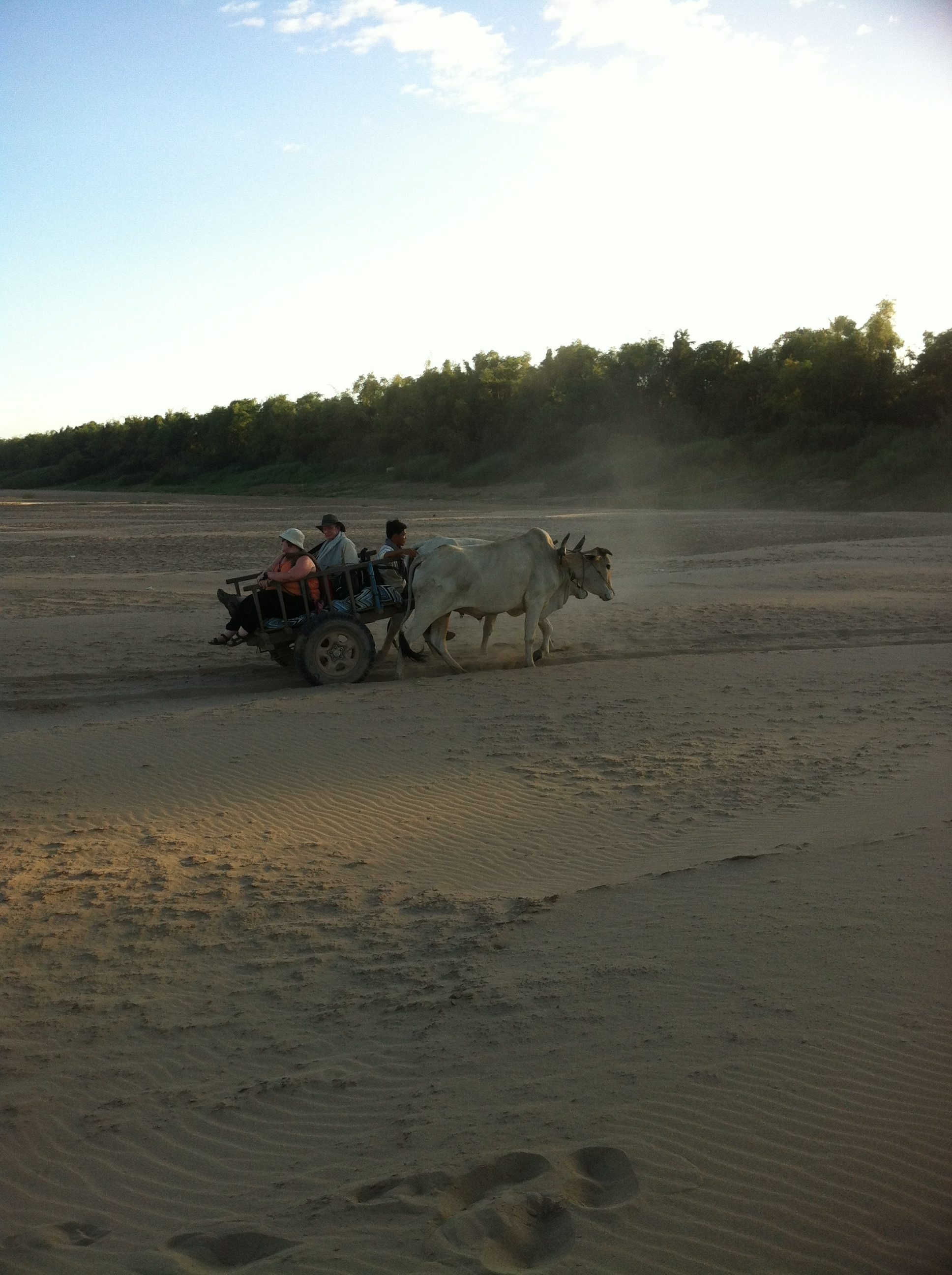 ox carts on the sand :)