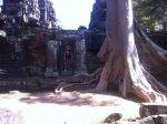 stunningly interesting tree