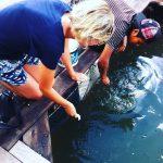 feeding the fish :)