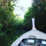 sailing through the mangroves